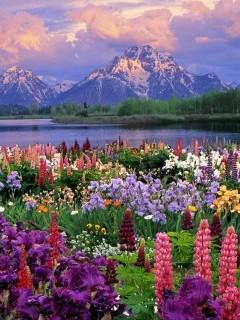 Очень красивая картинка с множеством цветов, окунись в мир альпийких лугов