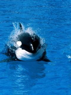 Симпатичный кит выныривает из воды, красивое зрелище!